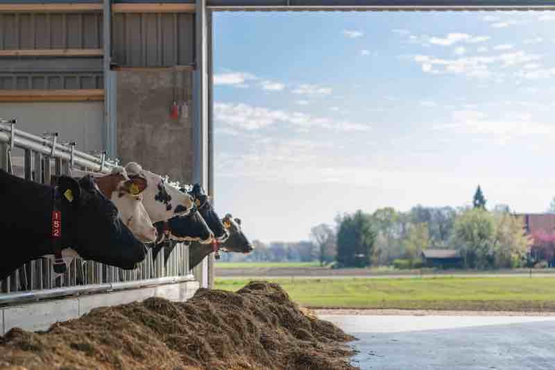 HR-Waenink-Lievelde-melkvee-VanWestreenen-A3impressies2019-8506947webresolutie