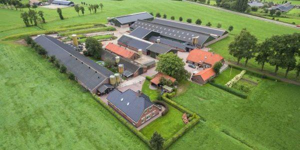 Nieuwe stal voor V.O.F. Drost, Barneveldseweg, Lunteren
